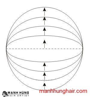 đường hình cung